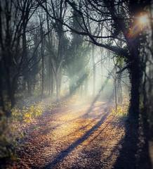 into the wildwoods... (india_snaps) Tags: morninglight undergrowth tootingcommon dappledlight sunlight woods