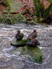 Padley Gorge Stones (Rupert Brun) Tags: hopevalley padleygorge 2018 derbyshire gorge grindleford padley winter hope england unitedkingdom gb landart balancedstones