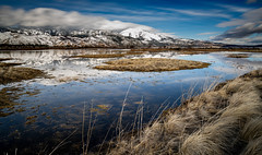 soggy wetlands (Aaron_Smith_Wolfe_Photography) Tags: washoevalley mt rose slidemountain carsoncity washoelake wetlands nikon d850 20mm sierra nevada