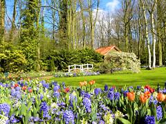 DSCN0586 (alainazer2) Tags: keukenhof lisse nederland paysbas holland hollande fiori fleurs flowers ciel cielo sky albero arbre tree
