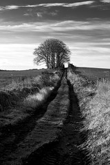 ... Take Me Home (PeskyMesky) Tags: aberdeenshire fintray copse road country tree forest nature landscape monochrome blackandwhite canon5d canon eos