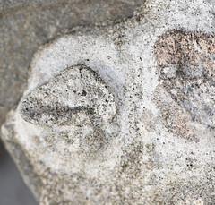 DSC_0864 (jgdav) Tags: ancient quartz pigment rock america macro ochre blue petroglyph pictograph