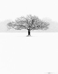 Winter Tree #7 So Alone 2540px (Matt Anderson Photography) Tags: albion america anderson bw black canada dane day daytime descriptors farm location maple matt mattanderson mattandersonphotography north oak objects otherkeywords outdoors people pine quebec season sky small style time travel tree wis walnut weather winter wisconsin agriculture art commercial country desolate double dual field fine gallery group horizontal image isolated landscape lifeless long nature no nobody one panoramic photography plant rock scenic shot snow solo trees two white wi wisc zzzpics