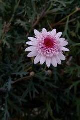 (・∀・) (guangxu233) Tags: photo photograph flower spring