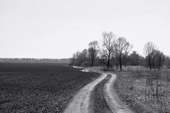 The road, as a symbol of our life. (ALEKSANDR RYBAK) Tags: изображения монохромный дорога символ жизнь извилистая прерывистая перепады деревья поле пейзаж трава images monochrome road symbol life winding intermittent swings trees field landscape grass