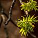 Spring 2019 Blooms (2)
