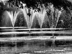 Fountains in Black and White (DRC - THANKS for 3.4 Million Views) Tags: fountains water estero florida bw blackandwhite olympus omdem5ii spray droplets pond rapallo