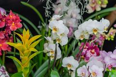 Orchids Mix (a7m2) Tags: abbeyklosterneuburg loweraustria flora flowers blumen ausstellung orchidexhibition züchter gärtner besucher