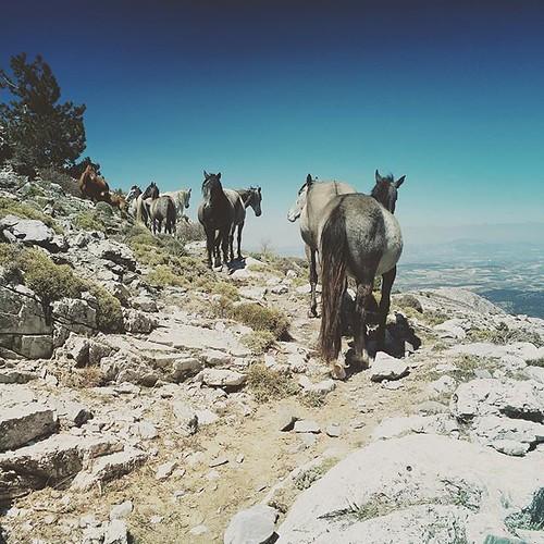 Alweer paarden! Maar wilde deze keer. Zomaar op het wandelpad vlak onder de top van La Maroma op zo'n 2000 meter hoogte. Waanzinnige ontmoeting (maar met diep respect hoor!) #horse #wildhorses #spain #españa #andalucia #hike #hiking #travel #lamaroma #mex