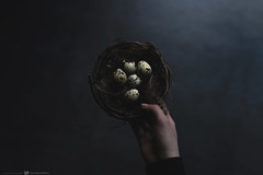 (CarolienCadoni..) Tags: sony sonyilcaa99m2 ilca99m2 sal50f14 50mmf14 eggs hand light lightandshadows shadows