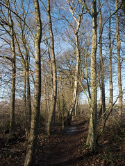 (Jeroen Hillenga) Tags: houtwal pad westerwolde groningen landscape landschap netherlands nederland
