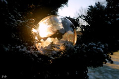 sunbeams-frozen bubbles (S.Garten) Tags: cold frozen ice sun sunbeams trees nature golden blue green winter snow soap bubble ilovenature thebeautyofnature magicmoments seifenblasen bullet likeiceinthesunshine momentofsilence theperfectmorning fairyland