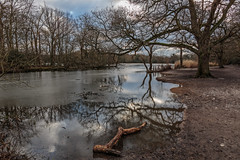Winter reflection (PhredKH) Tags: 2470mm canoneos5dmkiii canonphotography connaughtwater ef2470mmf4lisusm epping eppingforest fredkh photosbyphredkh phredkh splendid winter lake outdoorphotography scenicwater water tree sky