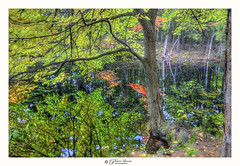 Serenity (Pearce Levrais Photography) Tags: nature outside outdoor tree trees pond lake water reflection leaf leaves autumn autumnal foilage canon hdr bark root roots landscape beautiful serene explore nh newhampshire