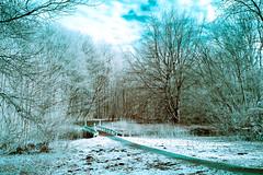365 Infrared 043.Amsterdamse bos bridge. (PeteMartin) Tags: 365 blue bridge colour forest infrared landscape amstelveen netherlands nld
