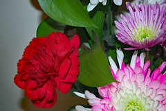 Flowers And Greenery. (dccradio) Tags: lumberton nc northcarolina robesoncounty indoor indoors inside flower floral flowers bouquet valentinesdaybouquet valentinesday carnation daisy february winter morning saturday saturdaymorning goodmorning nikon d40 dslr white pink red