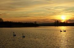 DSC06402 (janjanny) Tags: 5star 2012 delftsehout fromaperture landscapes places seasons wildlifeandlandscapes winter