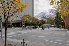 Lots of Yellow and Green (Jocey K) Tags: sonydscrx100m6 triptocanada ontario canada autumn toronto city streets people highrise clouds sky buildings architecture crossing trees autumncolours
