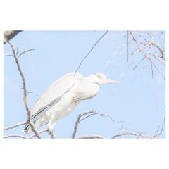 アオサギ (HAL_SYLPH) Tags: bird animal nature wildlife xh1 xf100400mm fujifilm pronegastd
