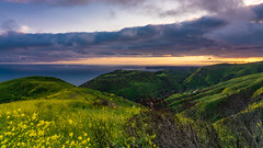 The Hills above Malibu. Sunset from the top of Corral Canyon Drive (topendsteve) Tags: malibu sunset clouds hills wildflowers yellow water ocean beach hillside storm