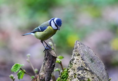 woodland visitor (watsonphilip12) Tags: woodland canon uk somerset