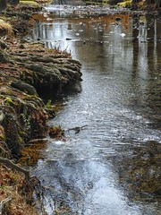Ripples of Water (clarkcg photography) Tags: watermove smileonsaturday stream bank roots cypress rocks rapids movement saturdaylandscape