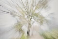 Impresiones en mañana de niebla (marisabosqued) Tags: movimientodezoom zoommovement zooming clavealta highkey árbol tree parquebruil bruilpark zaragoza tamronafsp1750mm snapseed