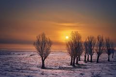 _DSC1484 (silviu_z) Tags: sunrise winter lanscape sony ilce7rm3 sky sunlight fields nature naturephotography cielo countryside