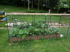 P1080935 (LPompey) Tags: garden strawbale strawbalegarden spaghettisquash wintersquash summersquash zucchini corgettes cucumbers tomatoes gardening