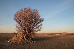 Cerezo al Atardecer (valentinasota) Tags: madrid spain españa peralesdelrío cerezo blossom