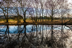 Lots of reflecting (tonguedevil) Tags: landscape outdoor outside view countryside winter nature woodland trees plants pond water reflections sky cloud sunlight sunrise dawn light shadow