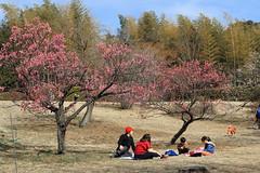 Early Spring (seiji2012) Tags: 昭和記念公園 立川市 梅 竹林 家族 japan tachikawa showakinepark ume plum picnic family