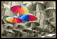 PARAGUAS  - UMBRELLAS (MONTXO-DONOSTIA) Tags: paraguas umbrellas bitono colorido colgados