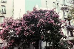 img704 (Buenos Aires loucoporanalogicas) Tags: pentona ii kodak vison 250 d buenos aires argentina