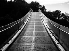 P2056897 Kings Park (Dave Curtis) Tags: perth kings park walkway elevated bridge metal blackandwhite