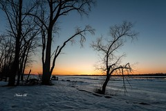 Colours Of Fleeing Light (Nataša Bandović) Tags: spring stillwinter river ottawariver canada ottawa riverbank natasabandovic natasabandovicphotography naturephotography nature snow ice frozen canoneos5dmarkiv photography outside sunset tree light colours trees
