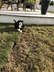 Ella Fits checking out her new backyard