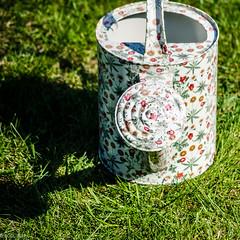 She's In The Garden! (BGDL) Tags: lightroomcc nikond7000 nikkor55200mmf4556g bgdl garden wateringcan grass lawn roundandround week15 weeklytheme flickrlounge