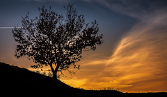 (Noel F.) Tags: sony a7r a7rii ii santiago compostela galiza galicia voigtlander 50 12 nokton vm sunset solpor