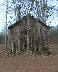 Hiding Behind a Tree (arrjryqp6) Tags: hiding oldbarns decay oldwood worn weathered