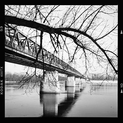 (halagabor) Tags: bnw blackandwhite monochrome tree winter bridge pillar pillars river riverbank riverside danube duna budapest hungary 6x6 film filmisnotdead filmcamera filmisalive filmphotography ishotfilm ishootfilm yashica tlr roll rollfilm kodak trix pushed 1600 analog analogcamera medium format landscape water reflection landmark lines manualfocus