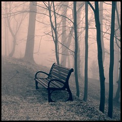 private life of things (luci_smid) Tags: trees bench stilllife impression monochrome