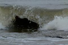 IMG_0523 (monika.carrie) Tags: monikacarrie wildlife scotland aberdeen waves