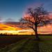 Sunset Arbre Solitaire Charnat (Philippe Pillière) Tags: sunset canon tokina arbre solitaire auvergne france