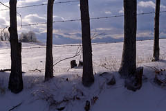 fence (kelemen.photography) Tags: farm hayfield winter snow ice fence fencerow barbedwire clouds tomkelemen nikondf