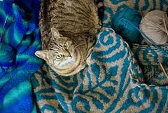 This is MINE now (evakatharina12) Tags: cat tabby kitty animal blanket wool knitting blue green fairisle
