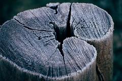 Cool Embrace (Tom Levold (www.levold.de/photosphere)) Tags: afsnikkor70300mmed fujixt2 forest nature köln cologne wood königsforst fuji natur rauhreif hoarfrost eis pfosten ice pillar