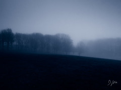 The Fog (DomWLive) Tags: trees spring countydurham northeastengland peterlee fields fog landscapes evening weather april england unitedkingdom gb