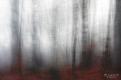 Misty morning (IngridVD. Photography) Tags: ertbrugge bomen mist meervoudigebelichting canon5dmkiv canon nature fog tree trees dark light leaves forest park art special belgium outdoor landscape autumn winter blur