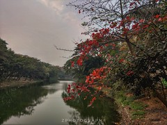 The Turning of Seasons (smzoha) Tags: trees greenery park leaves red green colors colorful vibrant seasons lake water reflection branches dried sky evening naturallights daylight mobilephotography streetphotography streetside dhaka bangladesh slidersunday hss